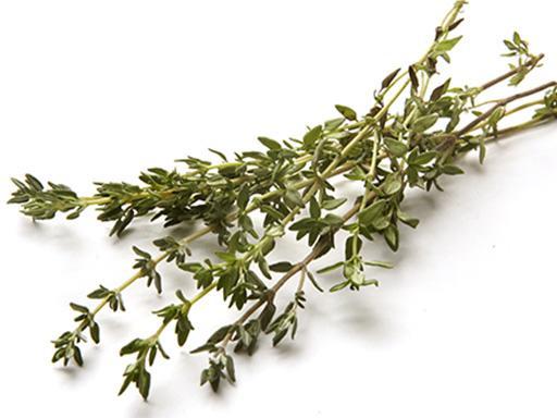 plante de thymol comme huile essentielle entrant dans la composition de Listerine